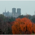 cathedrale automne